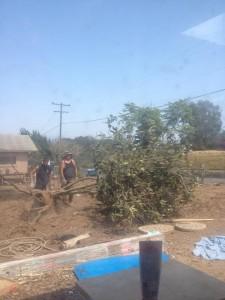 garden project7